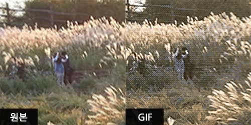 GIF 포맷이 원본의 색상을 다 담아내지 못하고 있습니다.